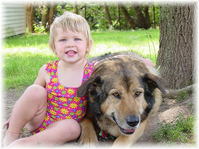 Brandi, A German Shepherd/Rottweiler mix who is a rescue found several years ago wandering the woods with no identification and many unsuccessful attempts to find the owner.